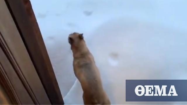 Η απίστευτη αντίδραση σκύλου μόλις βγαίνει στο χιόνι